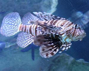 fish idiom